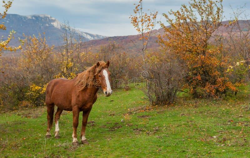 Hästanseendet på höstligt betar lokaliserat i Crimean berg royaltyfria foton