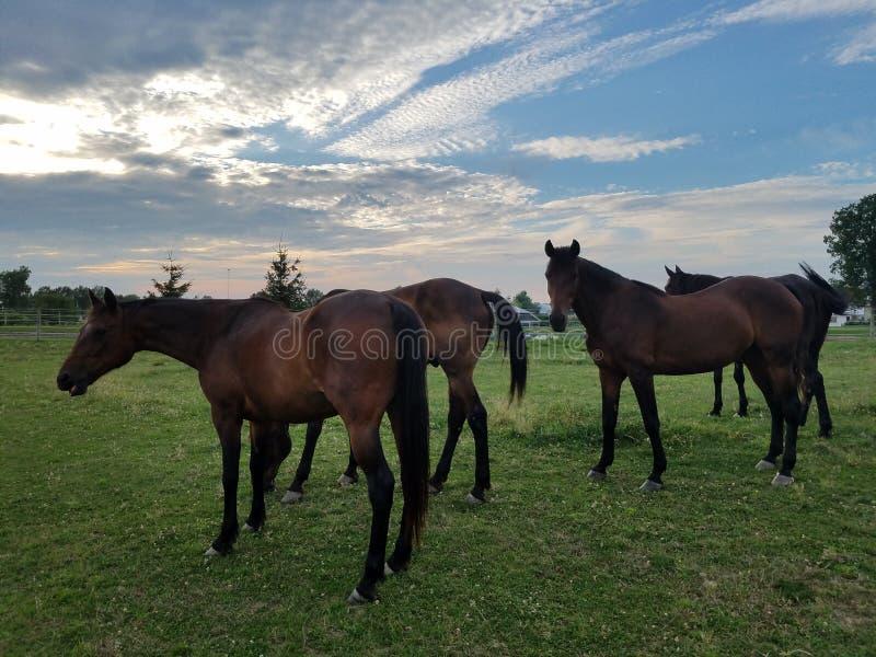 Hästar royaltyfri bild