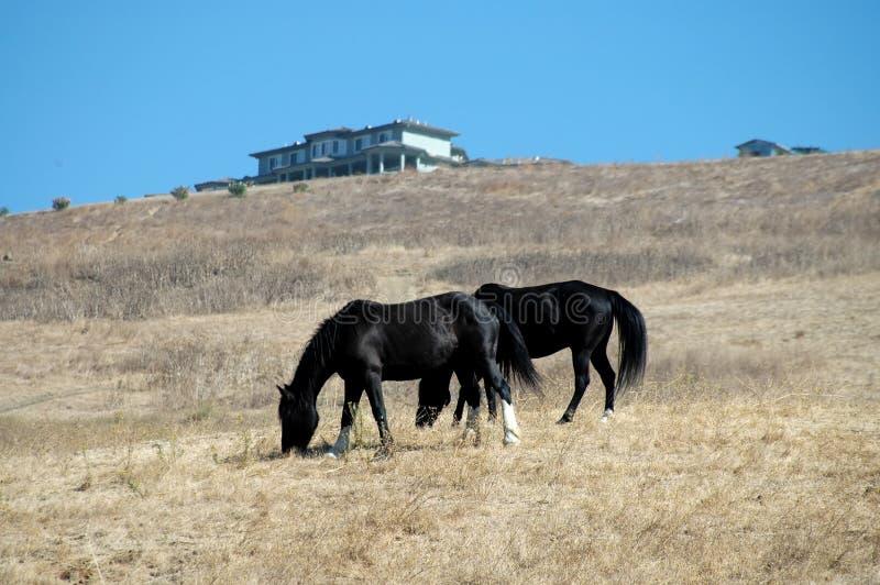 Download Hästar fotografering för bildbyråer. Bild av back, beta - 278621