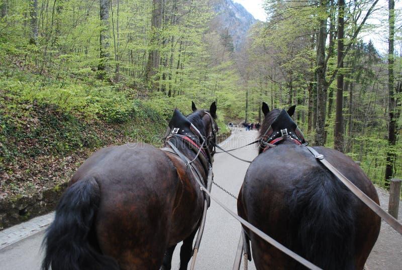 Hästar Cart i bergen arkivfoton