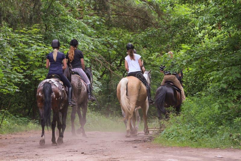 Hästar för en grupp människorridning i skogen royaltyfri foto