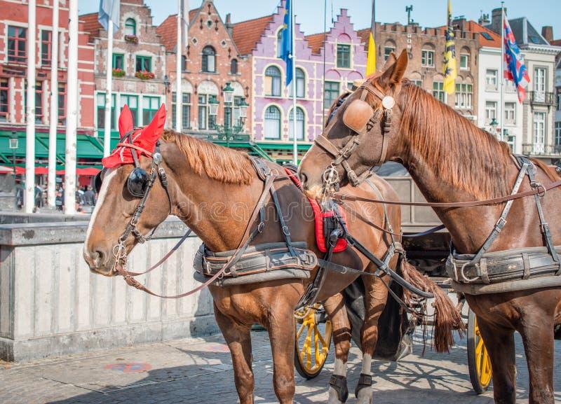 Hästar i Bruges, Belgien arkivfoto
