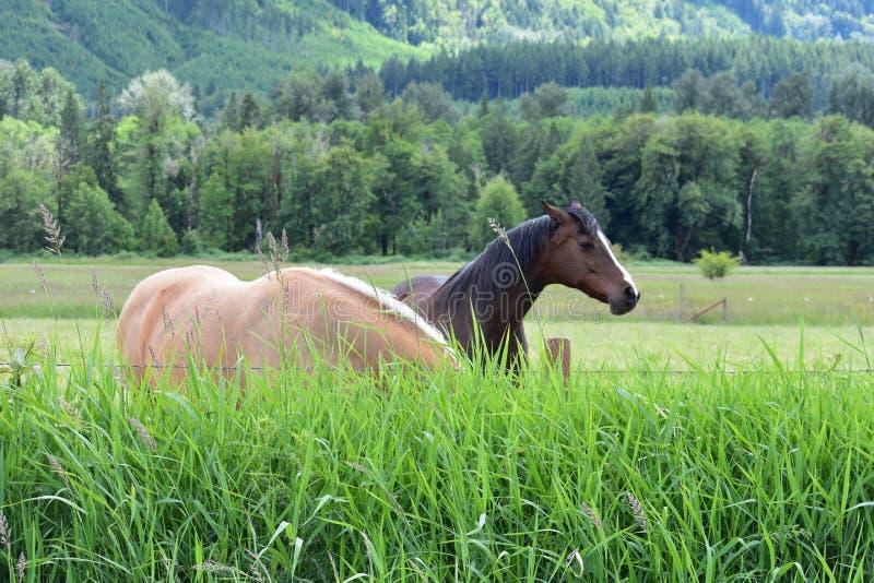 Hästar i dalen arkivfoton