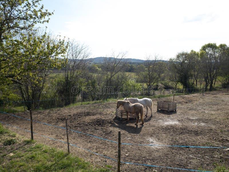 2 hästar i ett fält royaltyfri foto