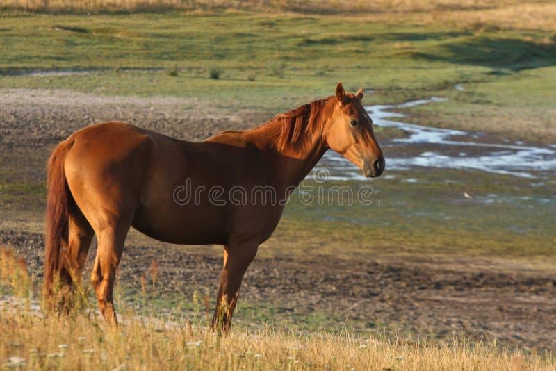 Hästar i ett fält i Sverige arkivfoton