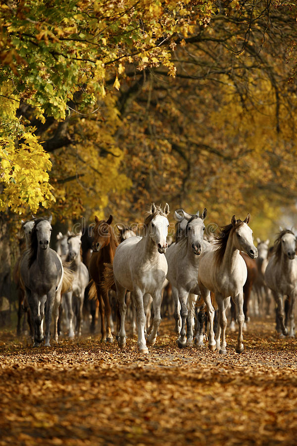 Hästar i höst royaltyfria foton