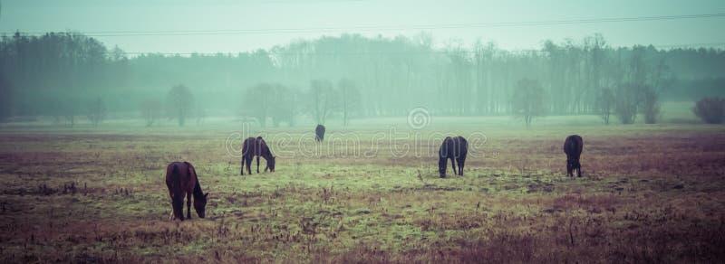 Hästar i morgonen royaltyfri fotografi