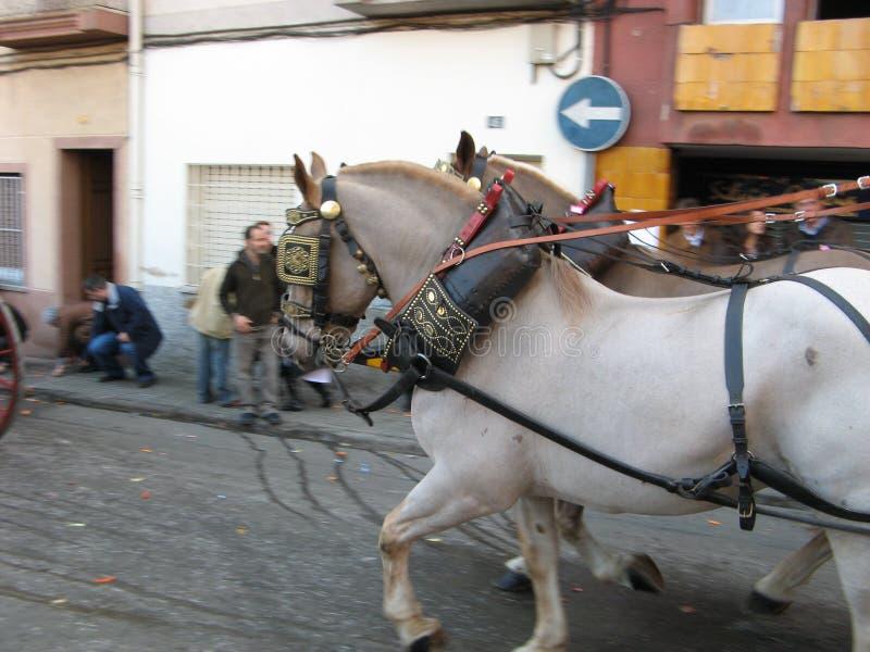 Hästar i släden royaltyfria bilder