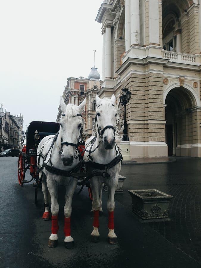 Hästar nära teater för opera för Odessa ` s royaltyfria bilder