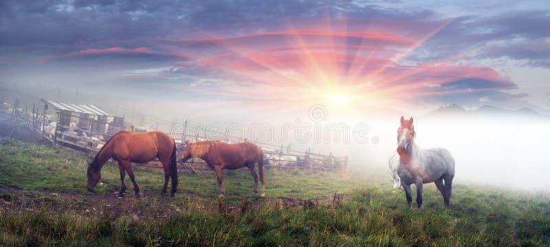 Hästar och får på gryning arkivbild
