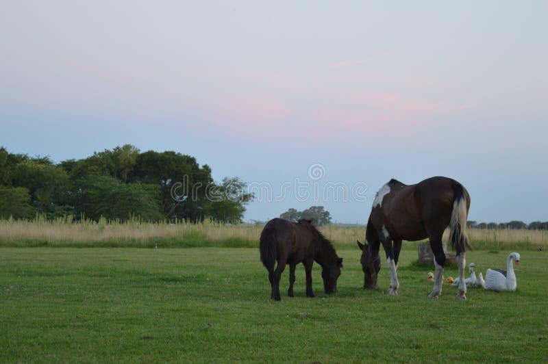Hästar och harmoni royaltyfri fotografi