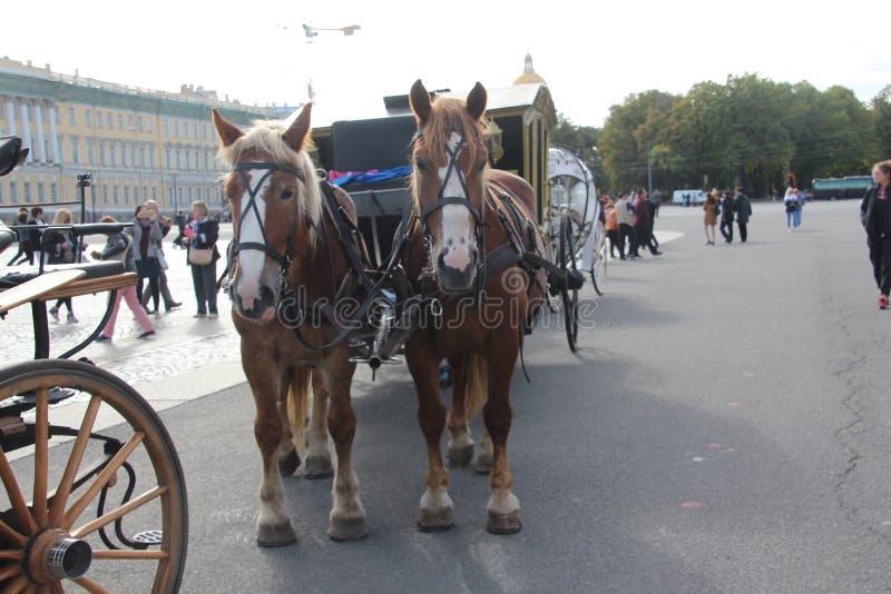 Hästar på de fyrkantiga helgonen Petersburg för slott Ryssland royaltyfri foto