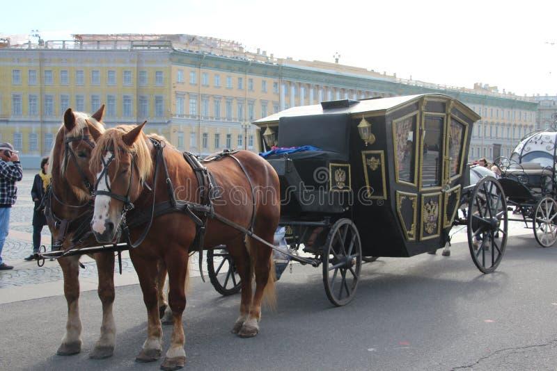 Hästar på de fyrkantiga helgonen Petersburg för slott Ryssland royaltyfri bild