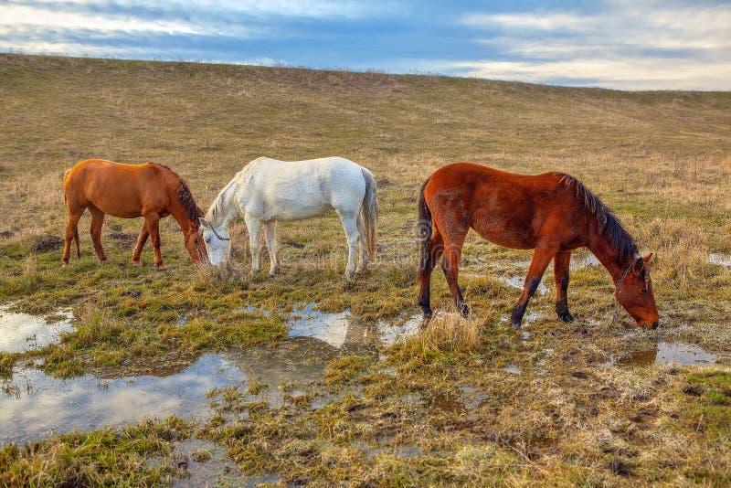 Hästar på den våta ängen arkivbild