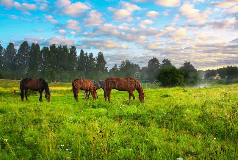 Hästar på en beta royaltyfri bild