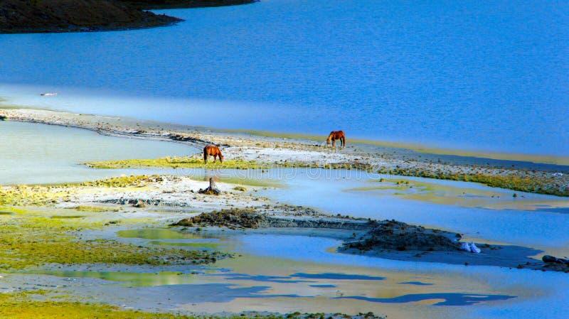 Hästar på en brunnsort på sjön AK-Kem arkivbild