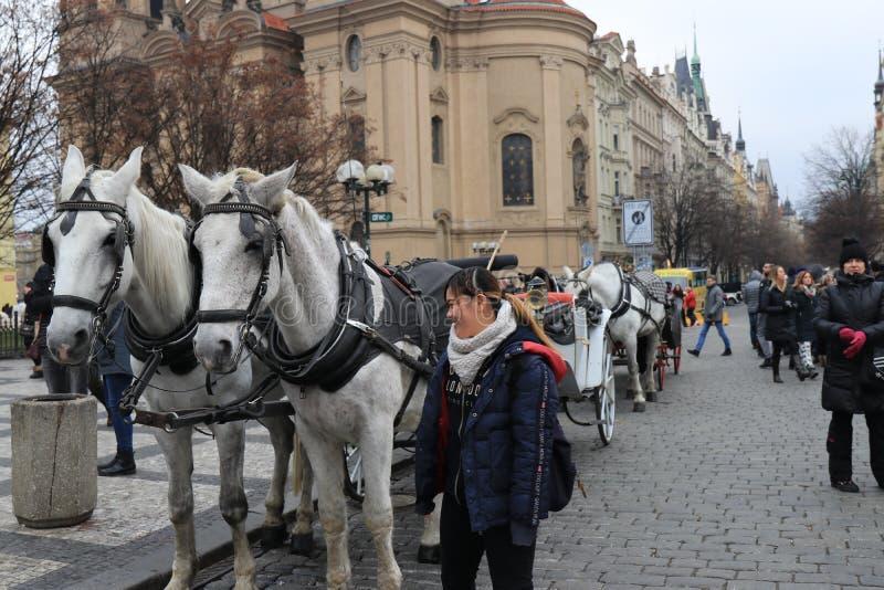 Hästar på gatorna av Prague arkivfoto