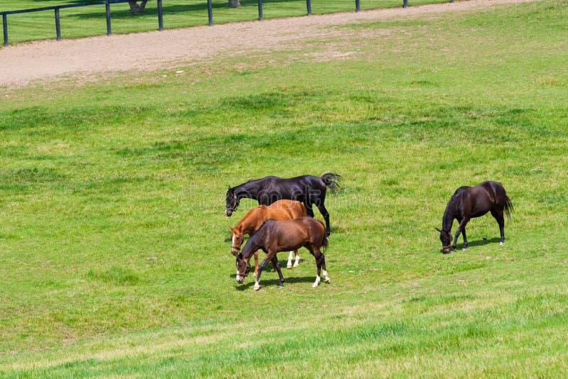 Hästar på hästlantgården fotografering för bildbyråer