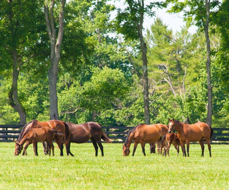 Hästar på hästlantgården royaltyfri fotografi