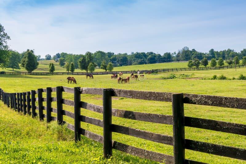 Hästar på hästlantgården royaltyfria foton