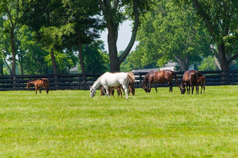 Hästar på hästlantgården Landet landskap royaltyfri fotografi