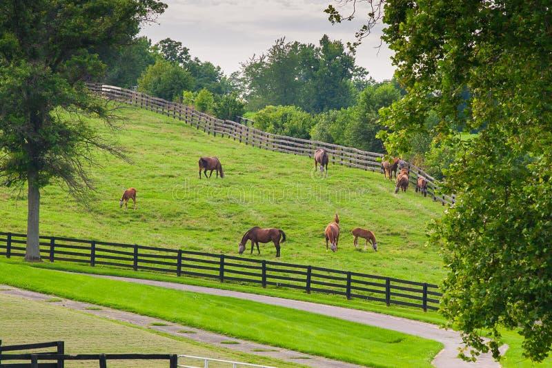 Hästar på hästlantgården Landet landskap arkivfoto