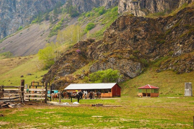 Hästar på hästlantgården Landet landskap arkivbilder