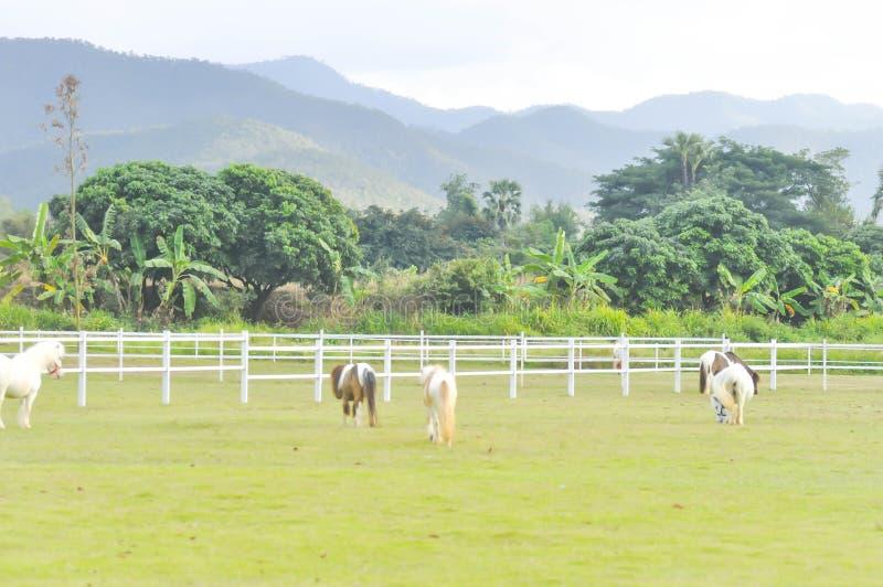 Hästar på lantgården arkivbilder