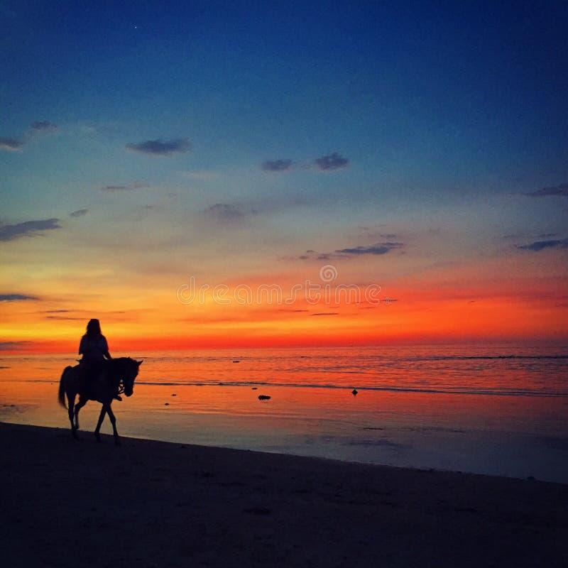 Hästar på solnedgången royaltyfria foton