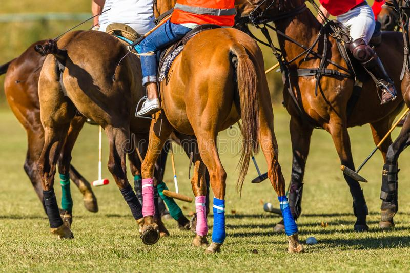 Hästar Polo Players Bunched Field Abstract royaltyfria foton