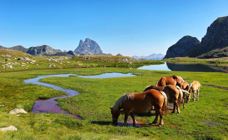 Hästar som betar i den Anayet platån, spanska Pyrenees, Aragon, Spanien royaltyfria foton