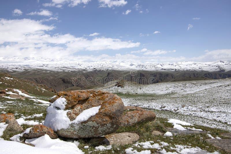 Hästar som betar på ett snöig, betar På horisonten snö-korkade berg Himlen i molnen kyrgyzstan arkivbild