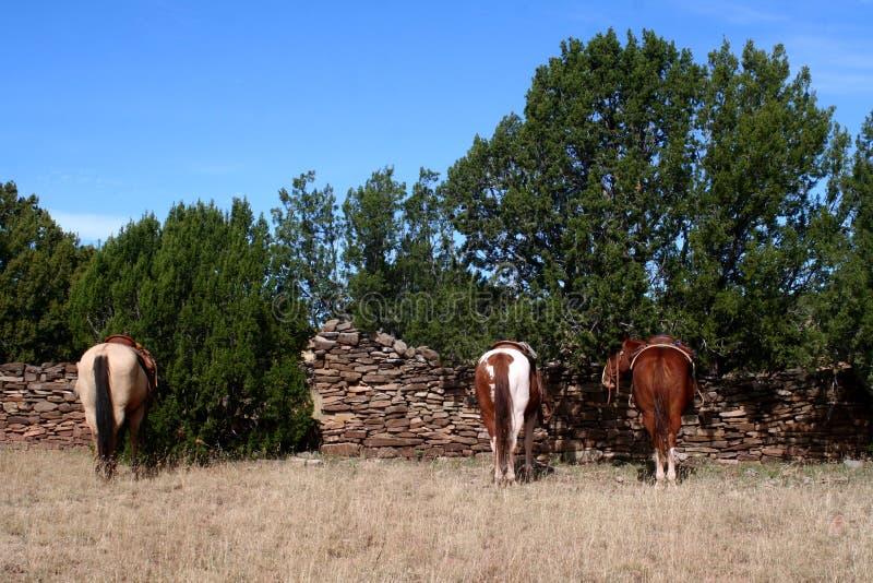 Hästar som där väntar på cowboyer royaltyfria foton