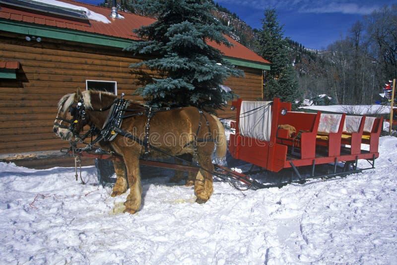 Hästar som drar släden i snö under ferier, lat z-ranch, asp, rödbruna Klockor, Co royaltyfri bild