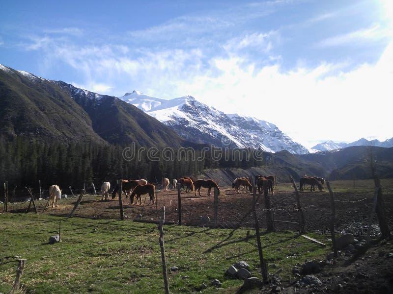 Hästar som klibbas i natur arkivfoton
