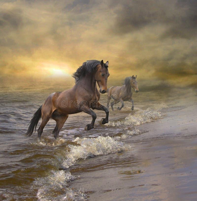 Hästar som kommer ut ur havet royaltyfri illustrationer