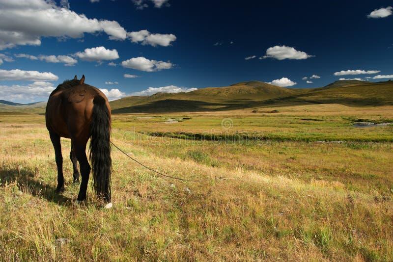 hästarbete royaltyfri bild