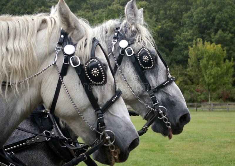 hästarbete royaltyfria bilder
