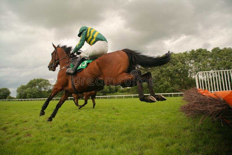 hästbanhoppningrace royaltyfri bild