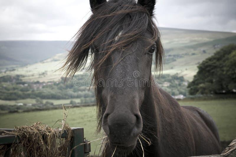 hästbarn arkivfoton