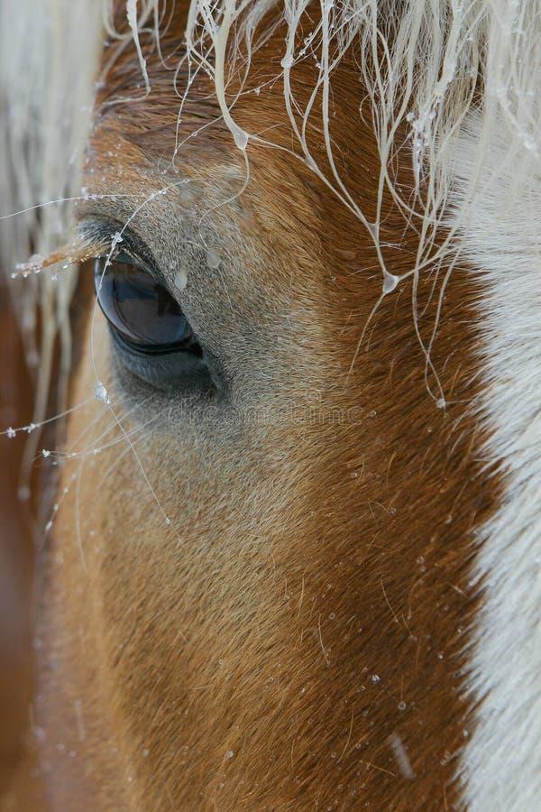 HästCloseup av ögat arkivfoto