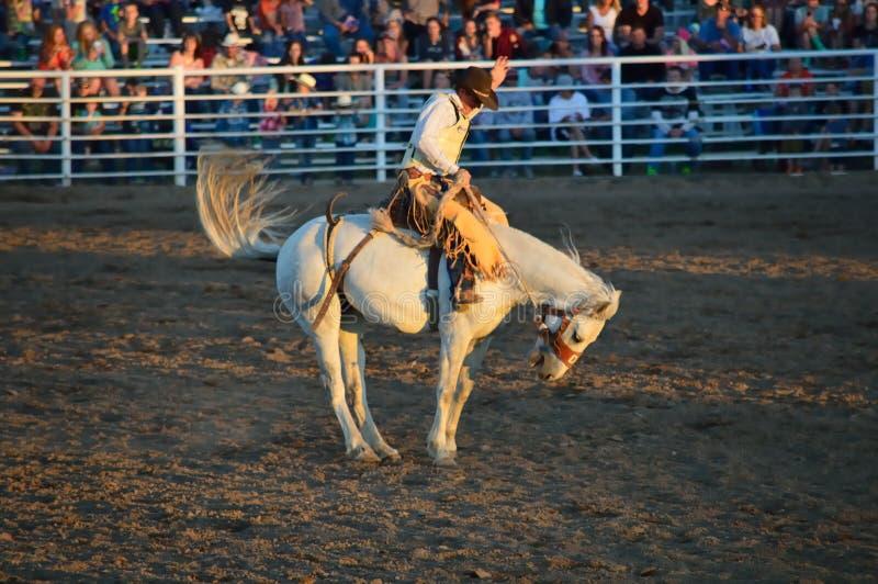 Hästdansaren arkivfoton