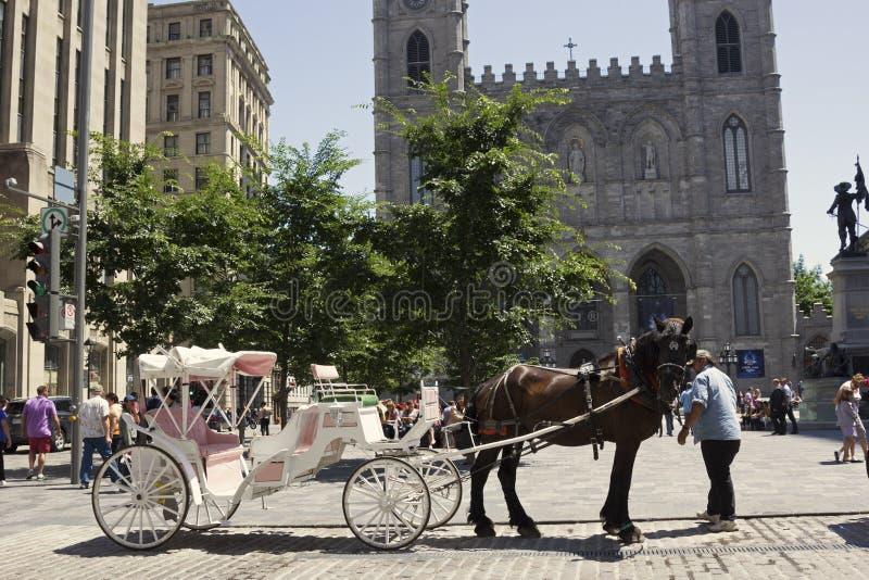 Hästdragen vagn framme av den Notre-Dame basilikan i Montreal arkivfoto