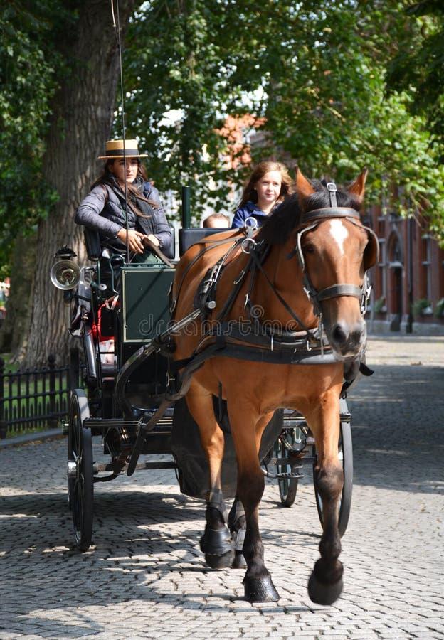 Hästdragna vagnar i Bruges, Belgien royaltyfri bild
