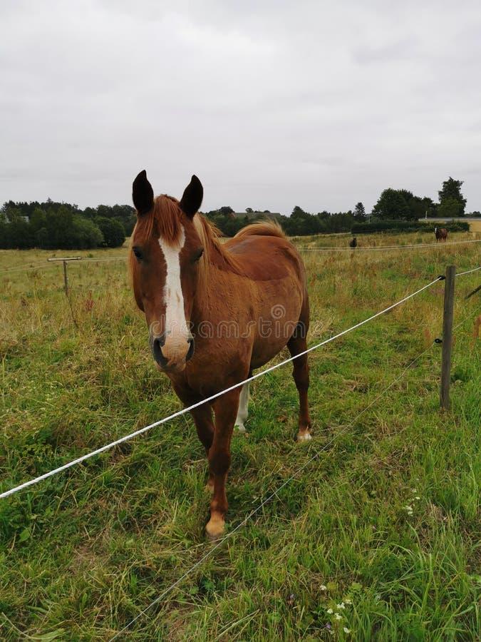 Hästen är liv arkivfoto