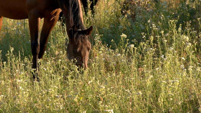 Hästen äter gräs fotografering för bildbyråer