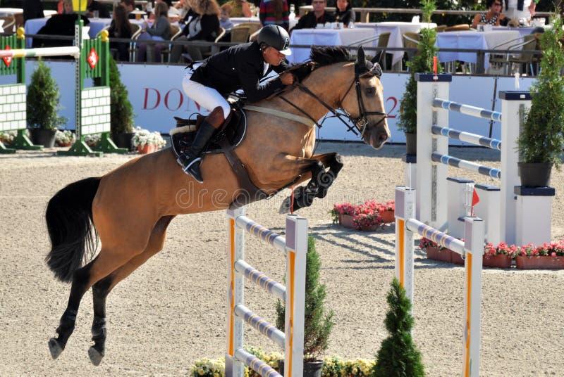 Hästen av ett hopp fäktar framme royaltyfri bild