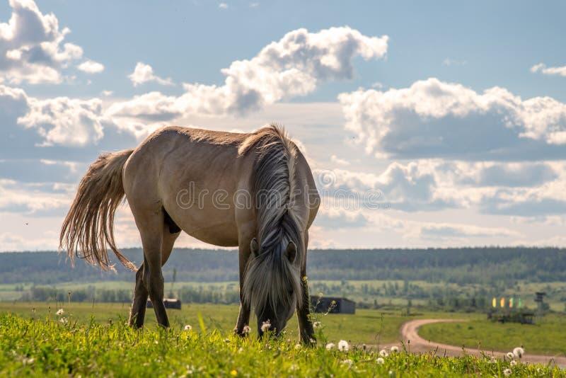 hästen betar sommar royaltyfria bilder