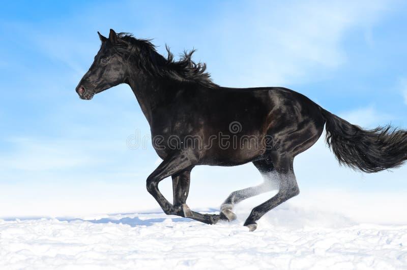 hästen för bakgrundsblackgaloppen kör skyen arkivbild