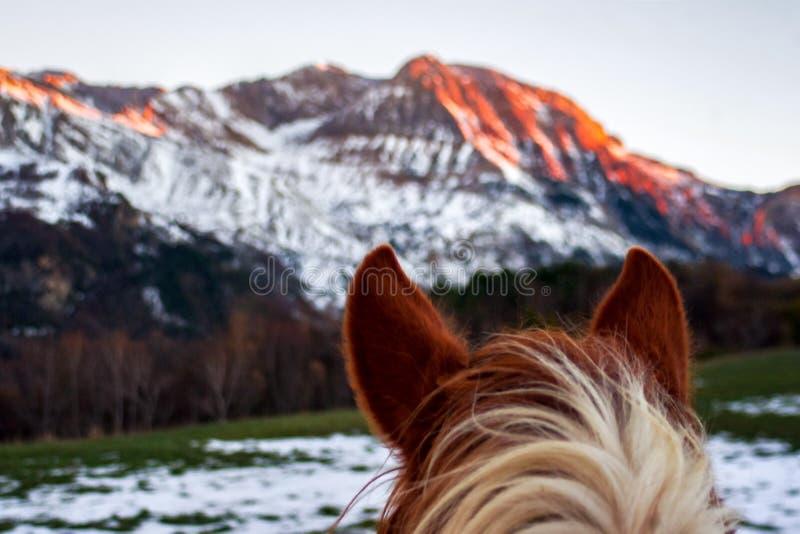 Hästen gå i ax framme av ett berg i en solnedgångeftermiddag fotografering för bildbyråer